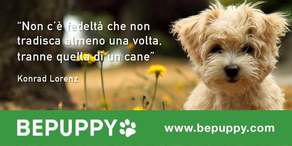 bepuppy 2